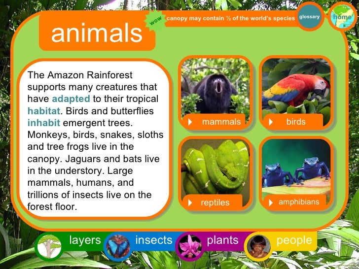 Rainforest Animals Pictures And Names