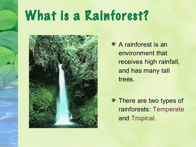 explain why rainforests are fragile ecosystems Cambridge geography a2 revision - tropical environments: tropical  cambridge geography a2 revision - tropical  cycles of rainforests or savanna ecosystems.