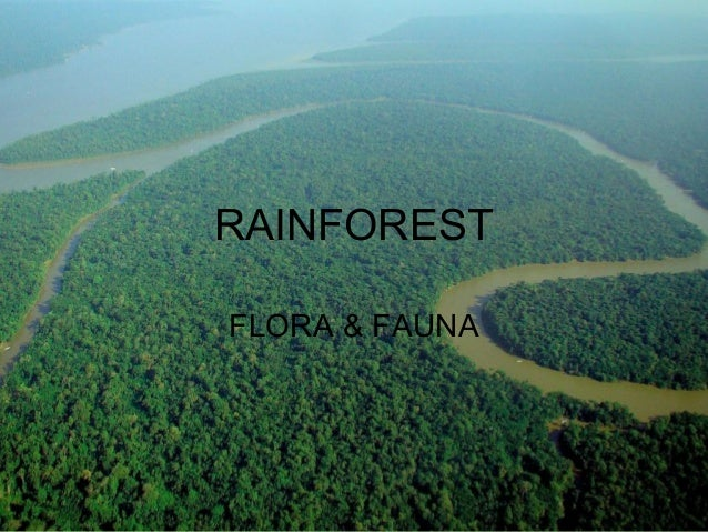 RAINFOREST FLORA & FAUNA