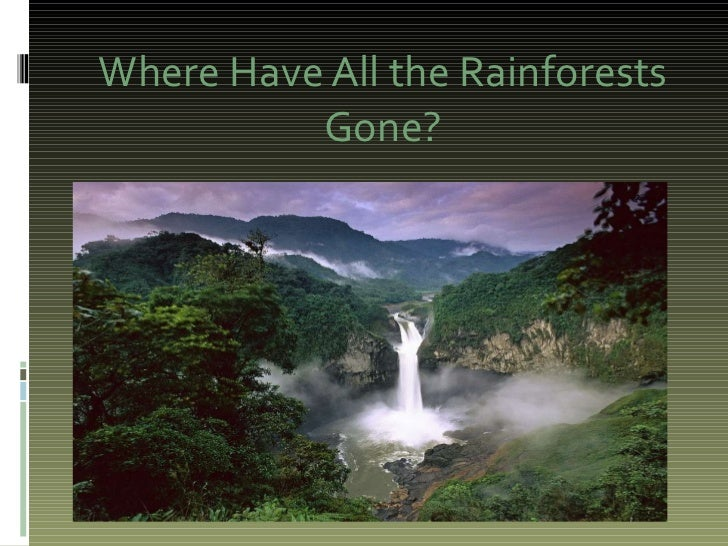 Where Have All the Rainforests Gone?