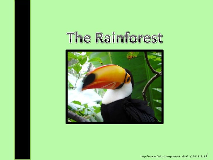 The Rainforest<br />http://www.flickr.com/photos/_alby2_/250121818/<br />
