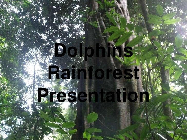 Dolphins RainforestPresentation