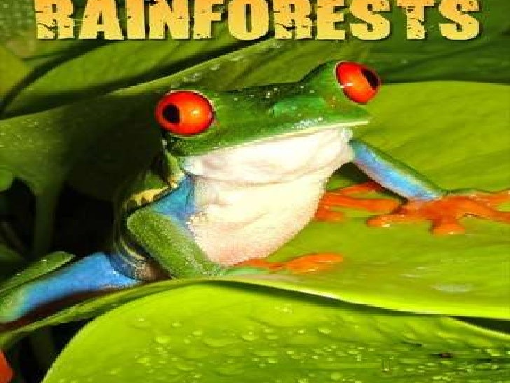 Rainforests are…..HOTTROPICALHUMID