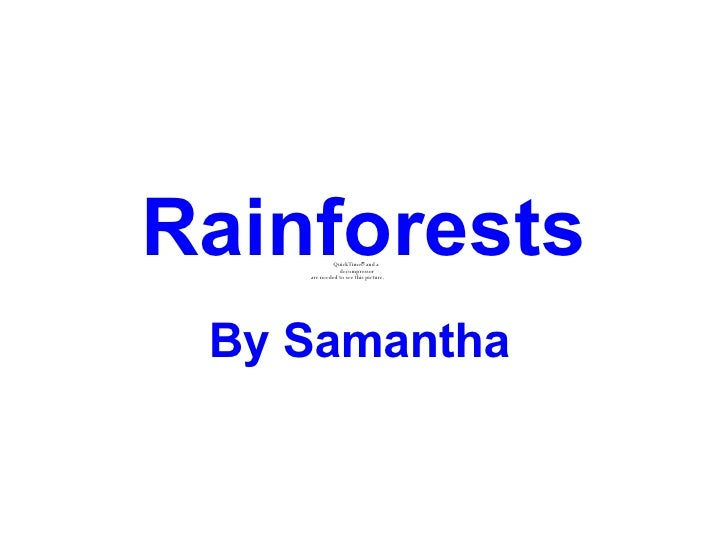 Rainforests By Samantha