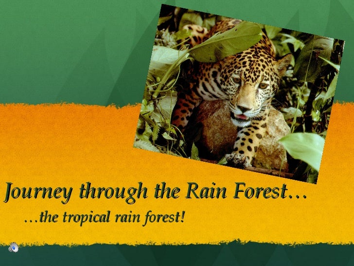 Journey through the Rain Forest… … the tropical rain forest!