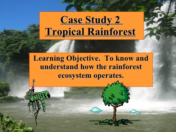 Case Study 2  Tropical Rainforest   Learning Objective.  To know and understand how the rainforest ecosystem operates.