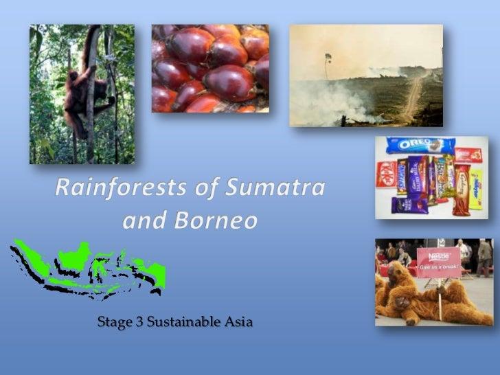 Rainforests of indonesia barb v 2