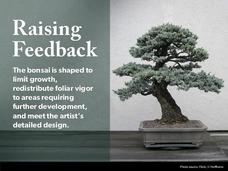 RaisingFeedbackThe bonsai is shaped tolimit growth,redistribute foliar vigorto areas requiringfurther development,and meet...