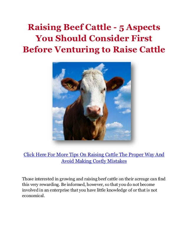 Raising Beef Cattle - 5 Aspects  You Should Consider FirstBefore Venturing to Raise CattleClick Here For More Tips On Rais...