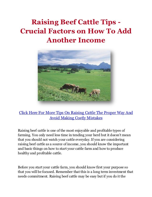 Raising Beef Cattle Tips - Crucial Factors on How To Add        Another IncomeClick Here For More Tips On Raising Cattle T...