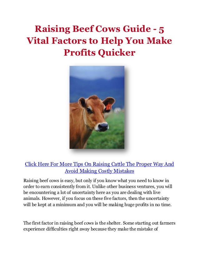 Raising Beef Cows Guide - 5 Vital Factors to Help You Make Profits Quicker
