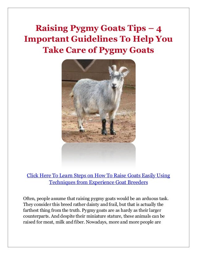 How To Take Care Of A Pygmy Goat