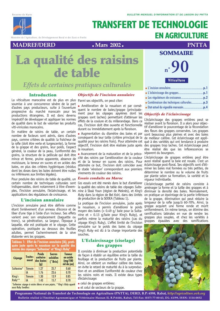 Raisins table-maroc