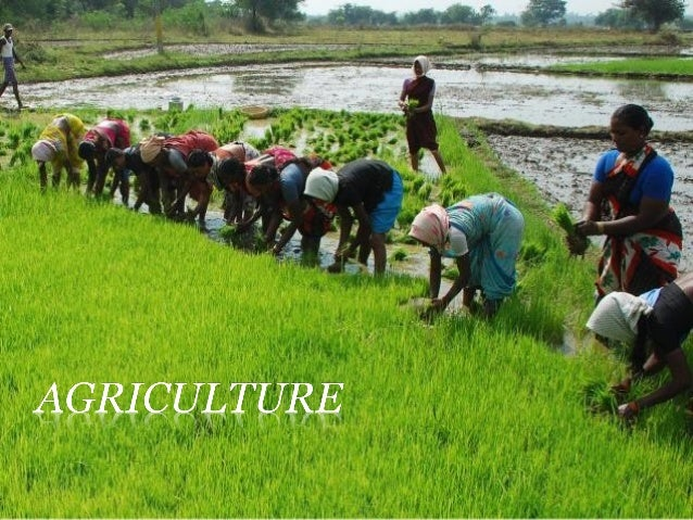    2/3rd of Indian    population is engaged    in agricultural    activities.   Food grains are the    most important   ...