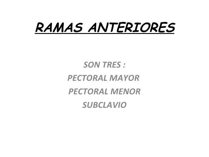 RAMAS ANTERIORES SON TRES : PECTORAL MAYOR  PECTORAL MENOR SUBCLAVIO