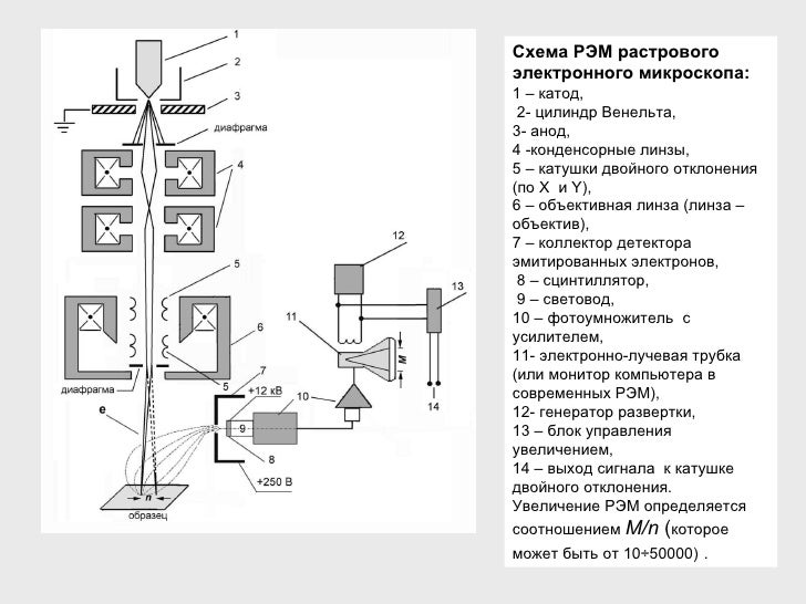 электронного микроскопа: 1
