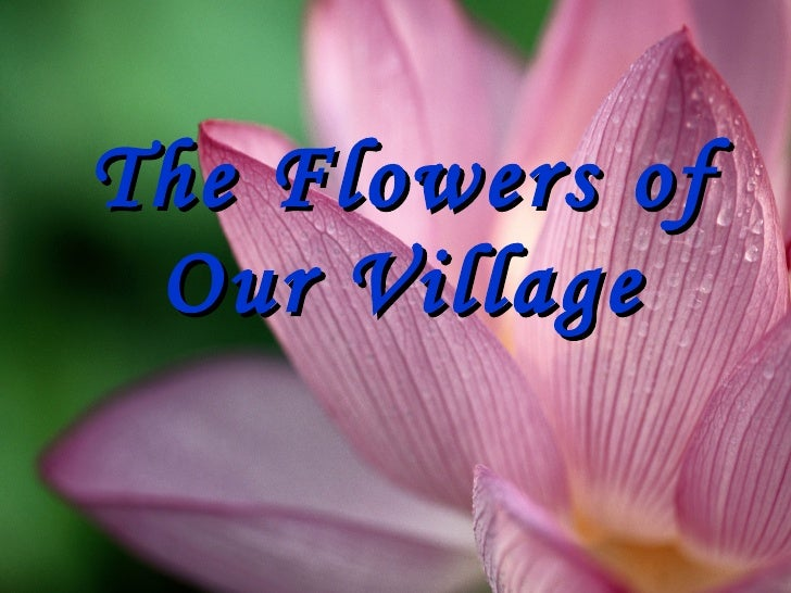 The Flowers of Our Village