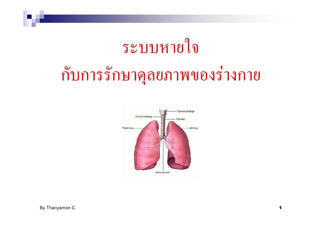 ระบบหายใจกับการรักษาดุลยภาพของร่างกาย(มนุษย์)