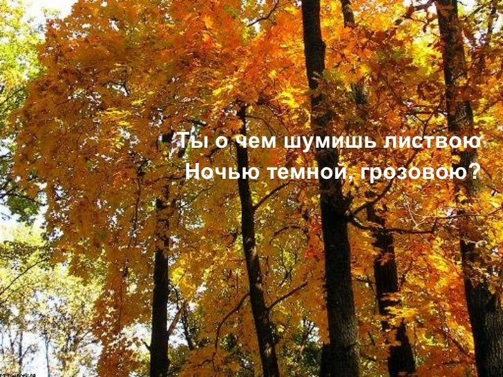 """Quot;Пожар в лесу"""" - внеурочная работа, уроки"""