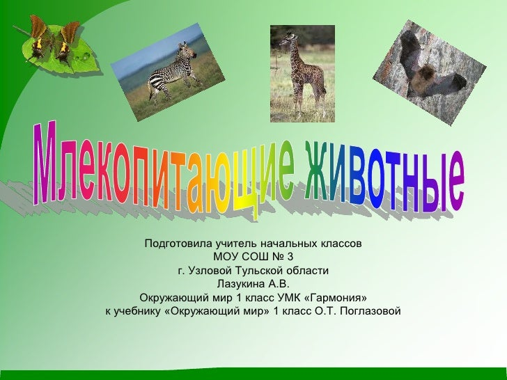 Млекопитающие Животные Презентация