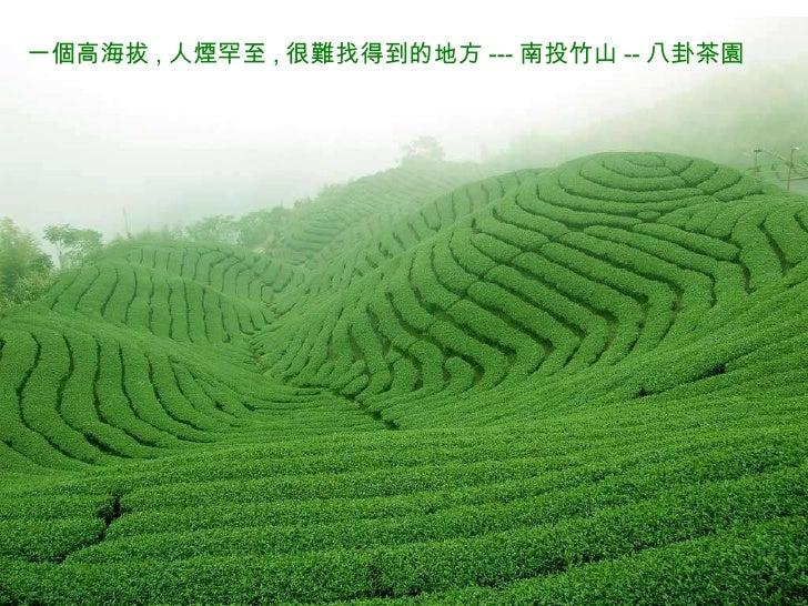 一個高海拔 , 人煙罕至 , 很難找得到的地方 --- 南投竹山 -- 八卦茶園