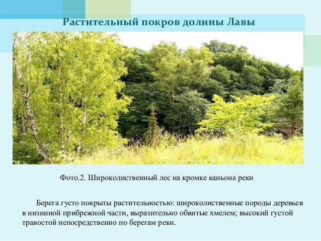 Растительный покров долины