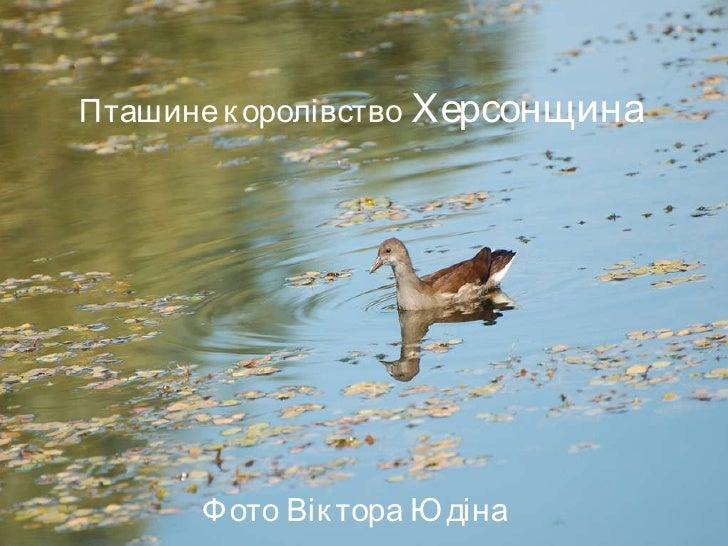 Пташине королівство  Херсонщина Фото Віктора Юдіна