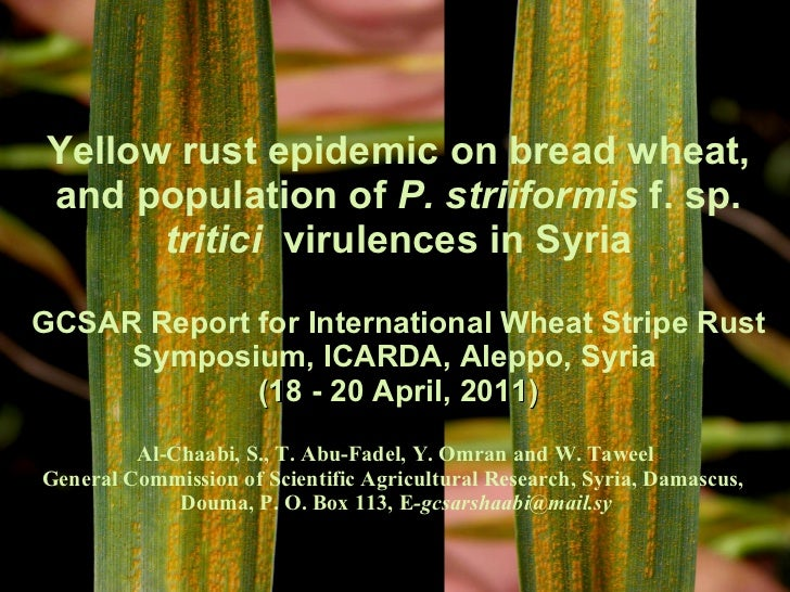 Yellow rust epidemic on bread wheat, and population of P. striiformis f. sp. tritici  virulences in Syria