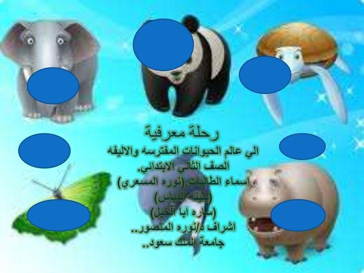 رحلة معرفية<br />التحليل<br />المقدمه<br />التقييم<br />المهام<br />المصادر<br />الي عالم الحيوانات المفترسهوالاليفه<br />...