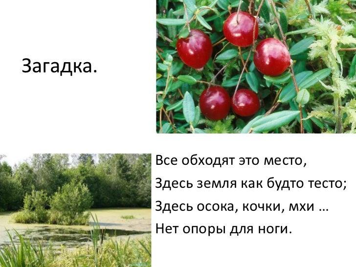 болотина