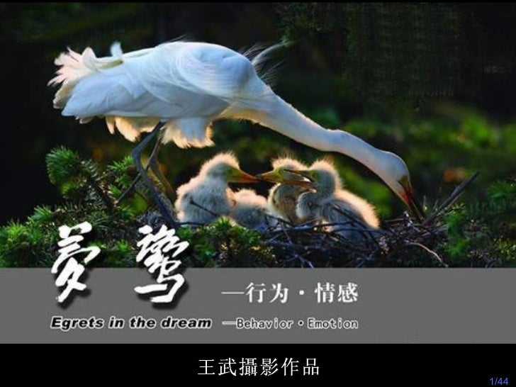/44 王武攝影作品