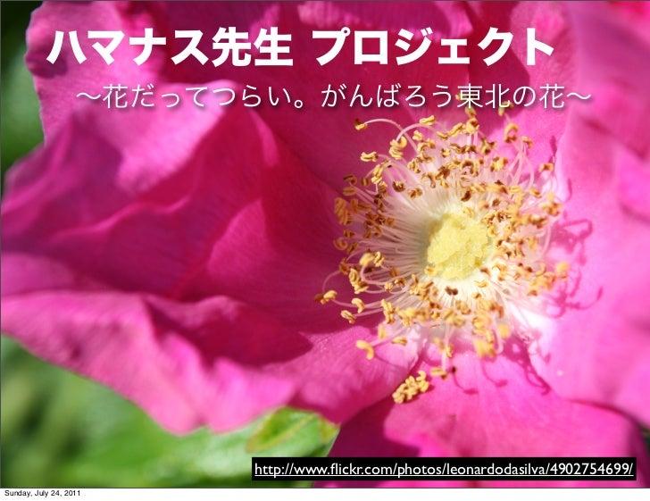 ハマナス先生:花から学ぶ復興の形