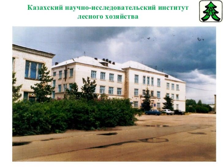 Казахский научно-исследовательский институт лесного хозяйства