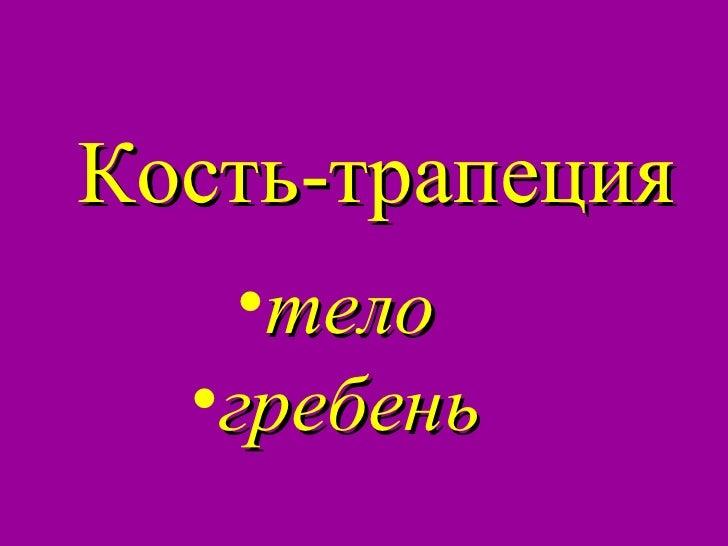 Кость-Трапеция