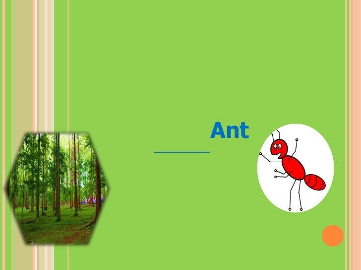 โครงการป่าร่มรื่นใน มข กลุ่ม Ant