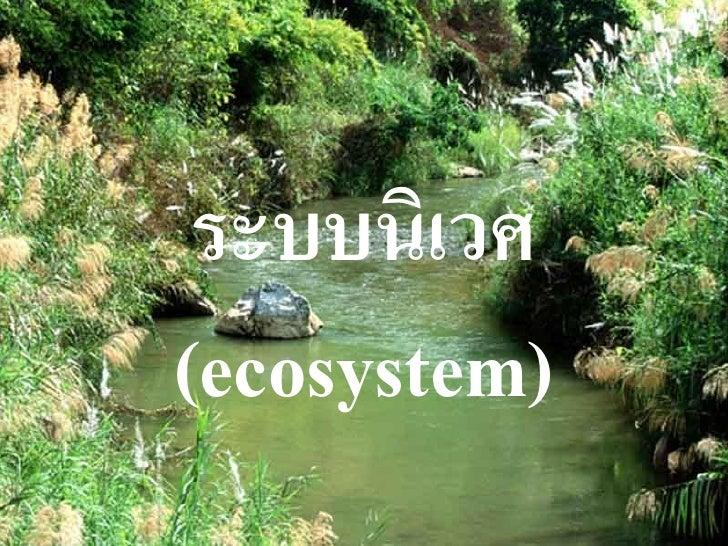 ระบบนิเวศ(ecosystem)