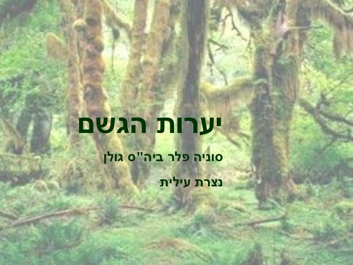 יערות הגשם   מצגת מפעילה