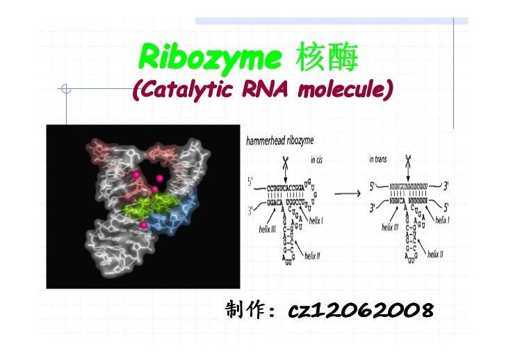 Ribozyme 核酶(Catalytic RNA molecule)        制作:cz12062008        制作:cz12062008
