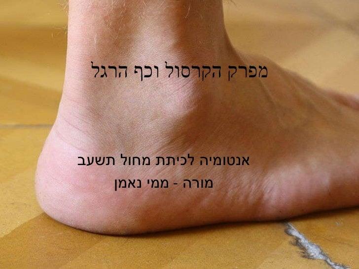 מפרק הקרסול וכף הרגל אנטומיה לכיתת מחול תשעב מורה  -  ממי נאמן