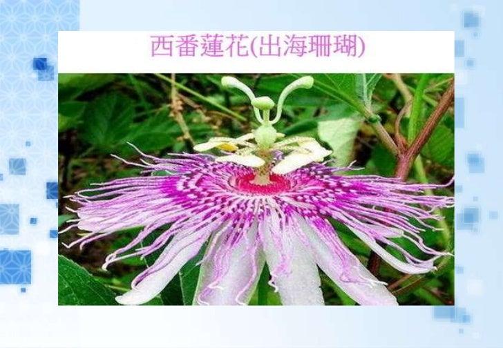 很少見過的奇異花卉