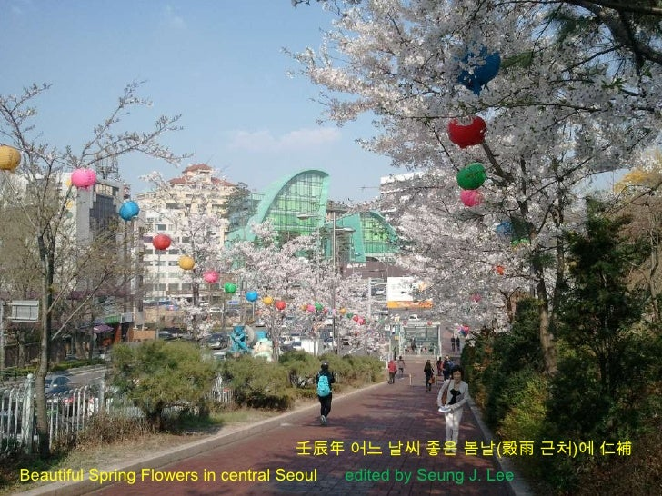 壬辰年 어느 날씨 좋은 봄날(穀雨 근처)에 仁補Beautiful Spring Flowers in central Seoul   edited by Seung J. Lee