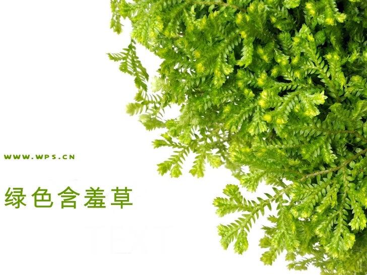 www.wp s .c n绿色含羞草