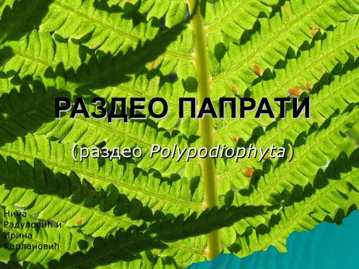 РАЗДЕО ПАПРАТИ              (раздео Polypodiophyta)НинаРадуловић иИринаКаплановић