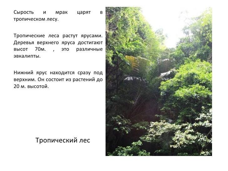 тропические растения и животные