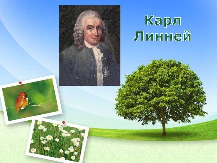 Реферат На Тему Карл Линней
