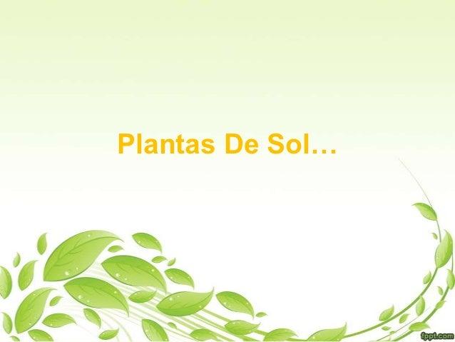 Plantas De Sol…