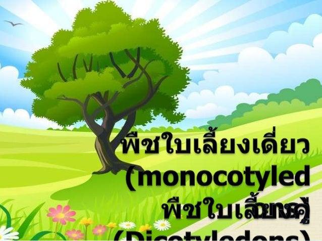 Monocotyledons1.        )
