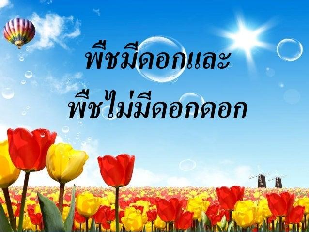 พืชมีดอกและพืชไม่ มีดอกดอก