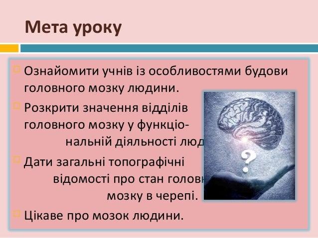 будови головного мозку