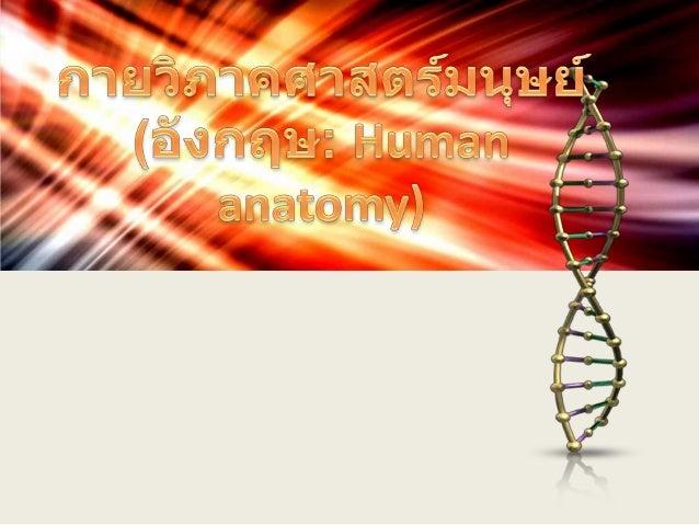 Human anatomy)  Gross anatomy)  Histology)  Neuroanatomy)  Developmental anatomy) Fabrica